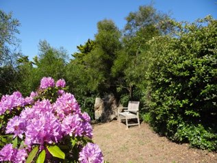 Terrasse des rhododendrons